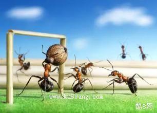蚂蚁国王的大力士