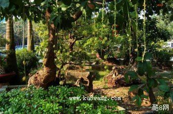 青岛植物园